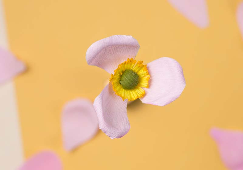 HOORAY-Magazine_How-To-Make-Paper-Flowers_07