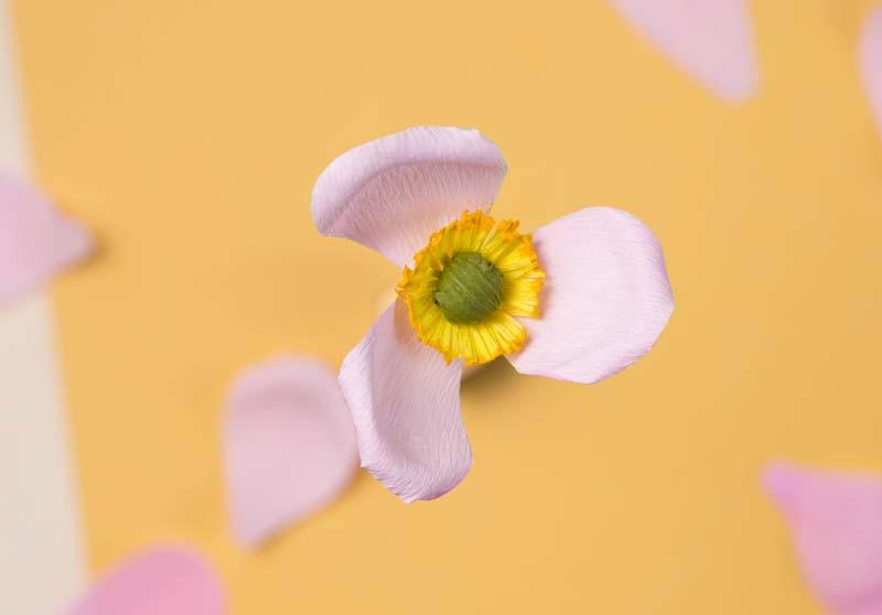 HOORAY-Magazine_How-To-Make-Paper-Flowers_07